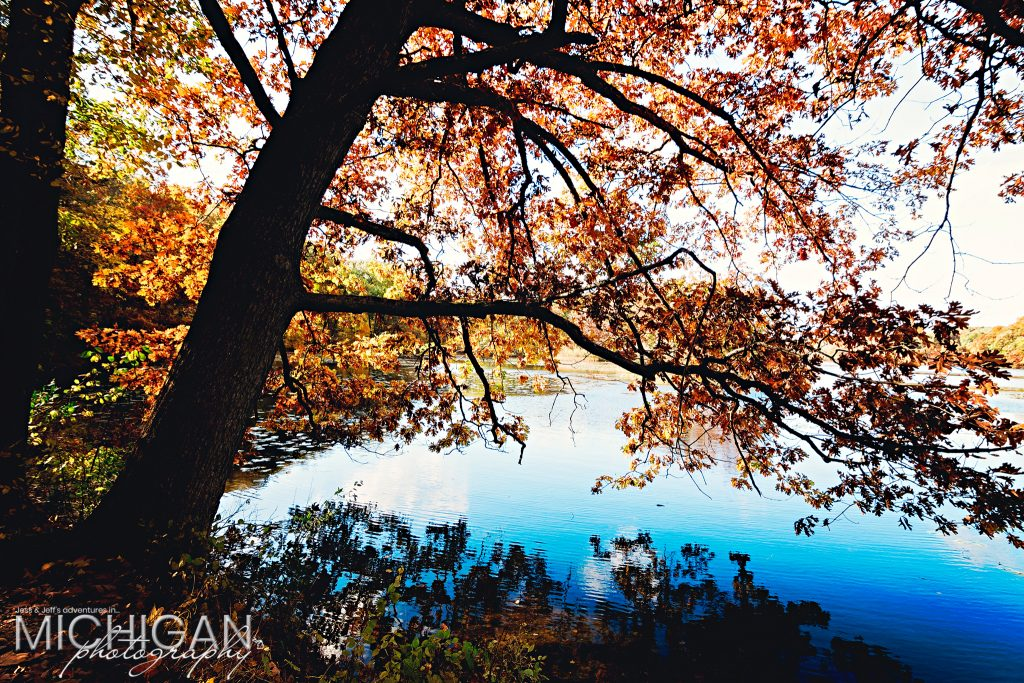 Lovely sunlight creates a strong contrast with the trees along the shoreline.