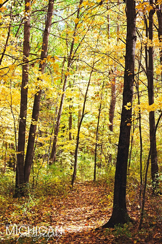 Beautiful color along the trail at the peak of autumn at Holly Recreation Area