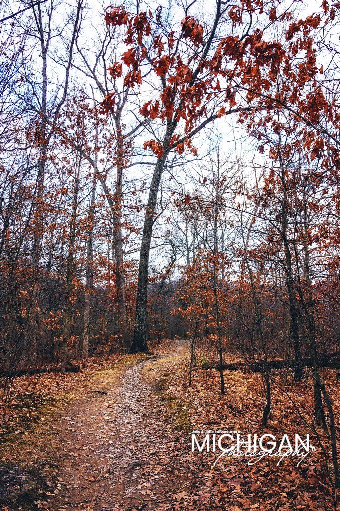 Oak trees still hanging onto their leaves from last season.