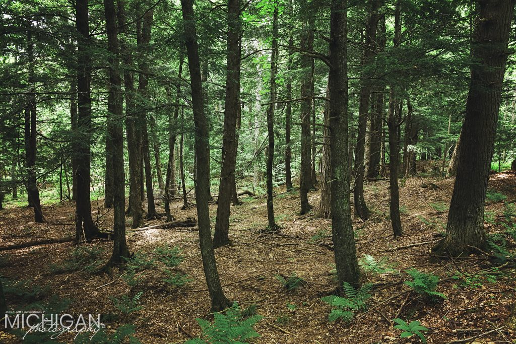 Union Spring Trail - A forest view on the trail leading to the Porcupine Mountains Union Spring