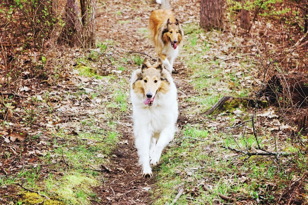 Anoush and Duncan running free on the trail.
