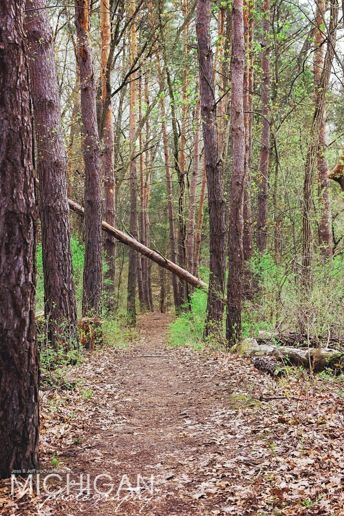 A pine tree lined path on the Losee Lake Trail