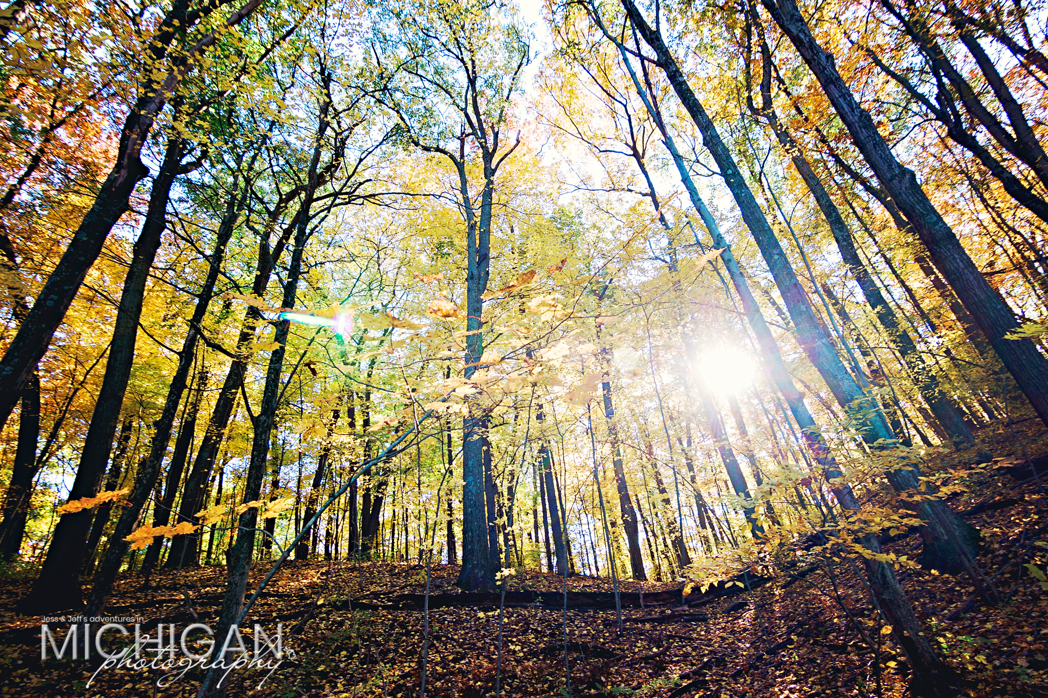 Sun shining through the yellowed woods at Holly State Recreation Area