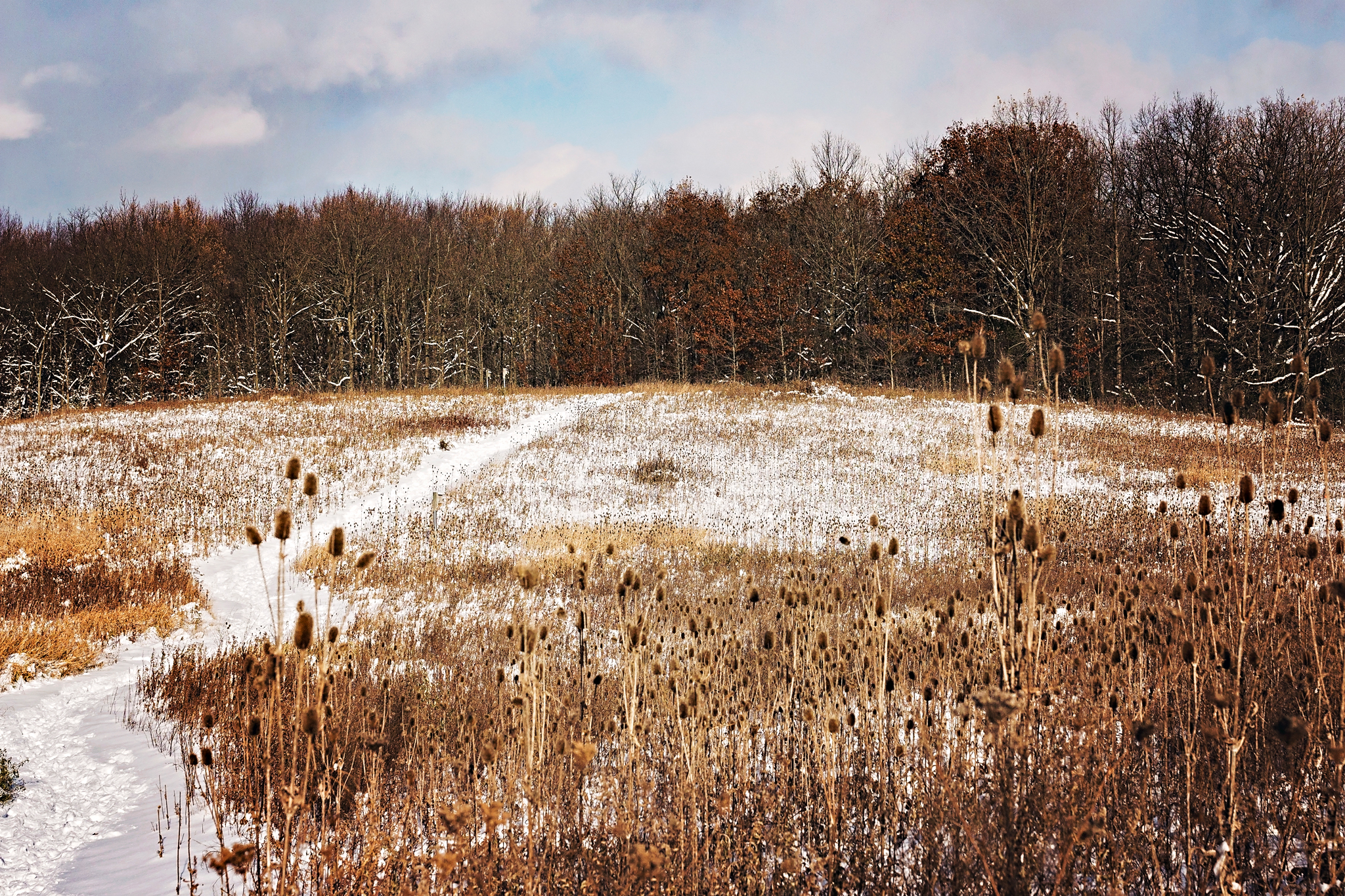 Early winter at LeFurge Woods Nature Preserve