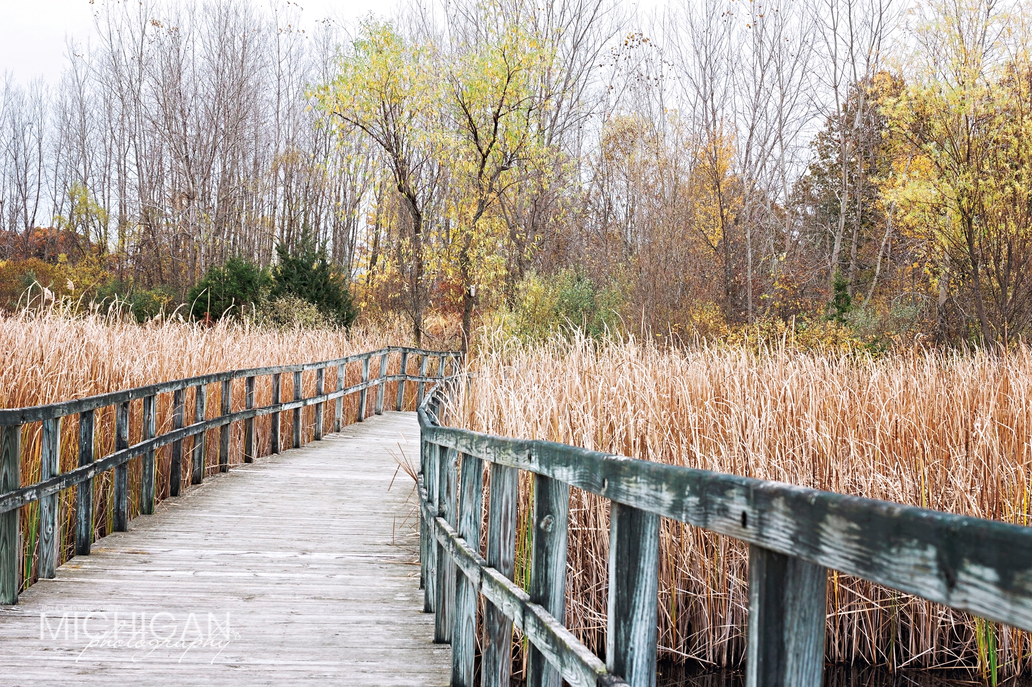 One of the boardwalk trails winding through Crosswinds Marsh.