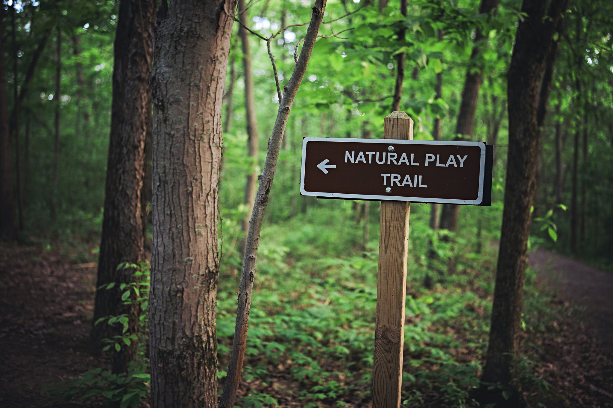 The Natural Play Trail