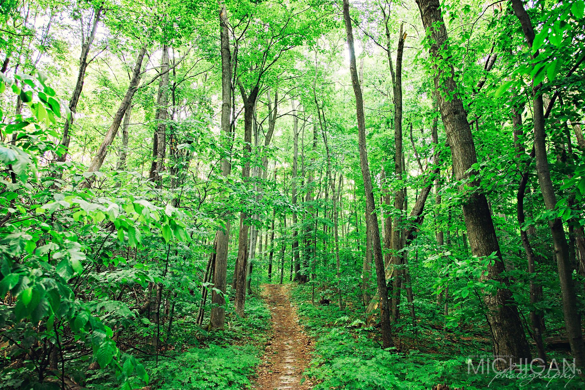 A trail scene along the path.