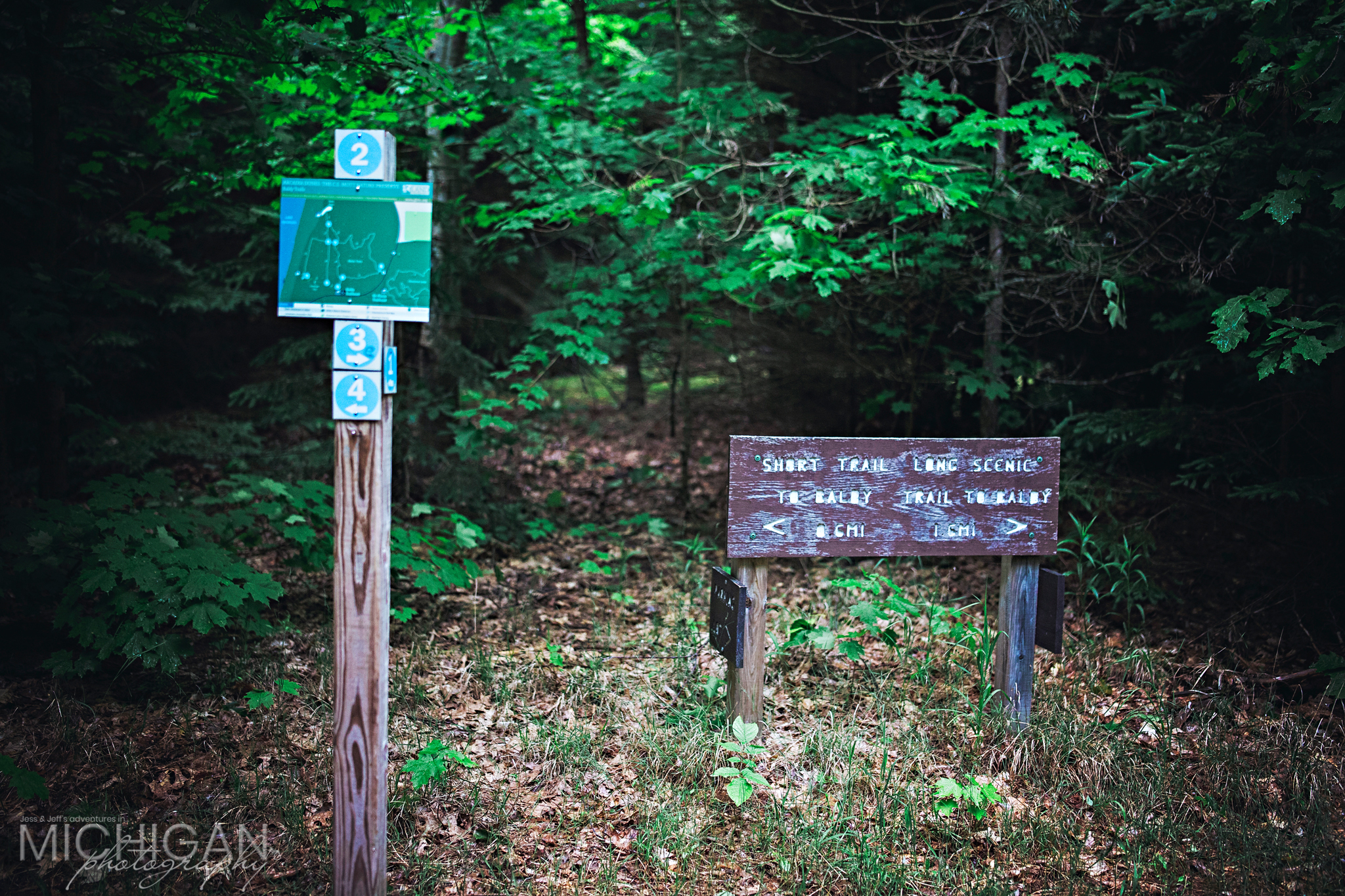Trail marker on Arcadia Dunes Old Baldy Trail