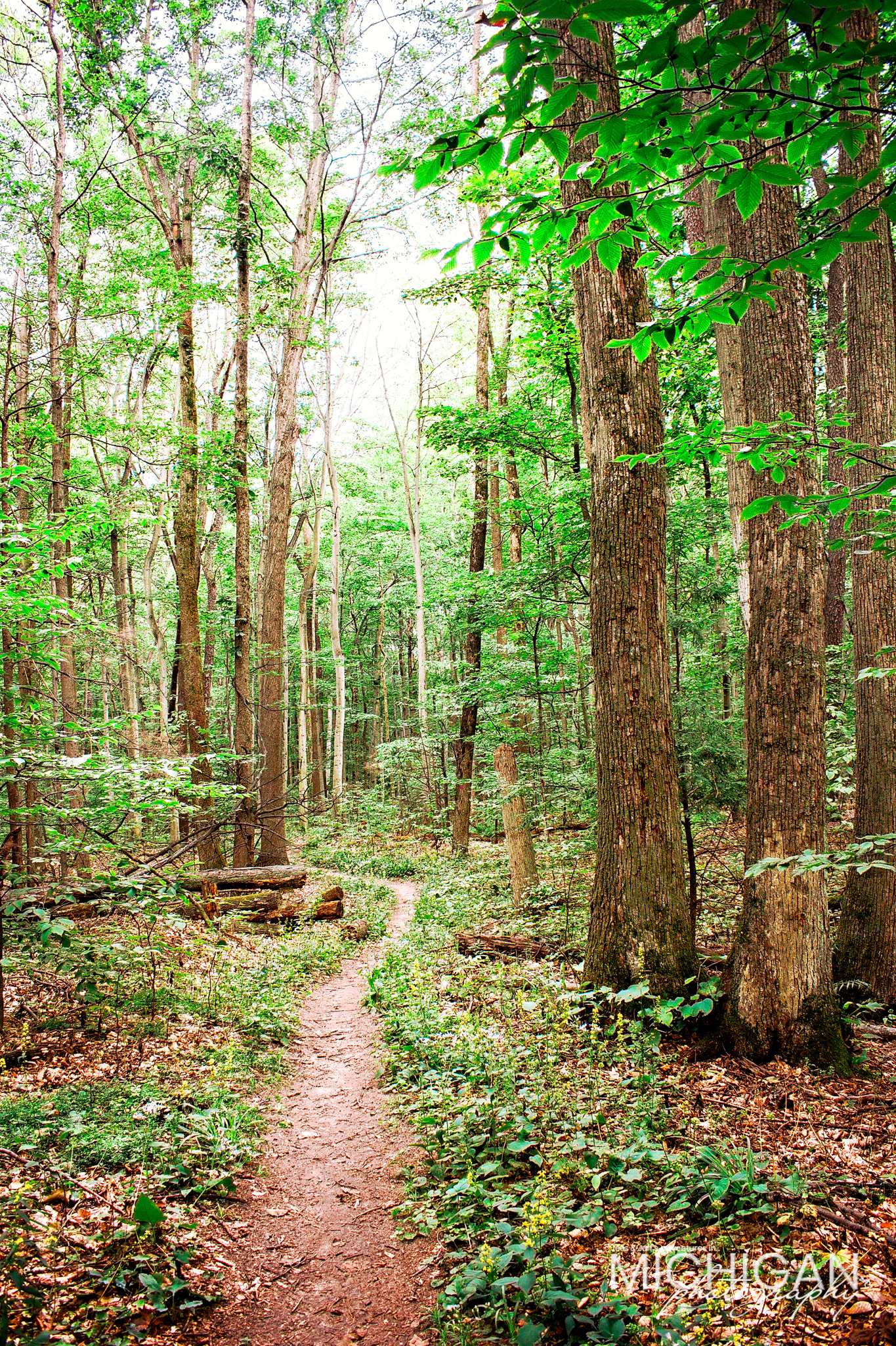 A late spring scene at Old Baldy Trail in Arcadia Michigan